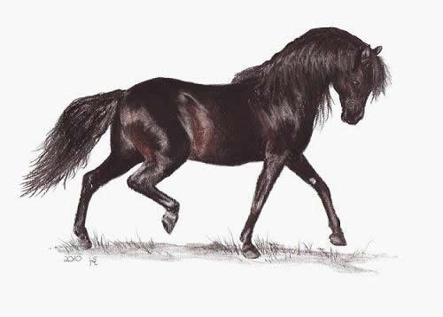 Ihre Pferdeportrait von M. Hentschel