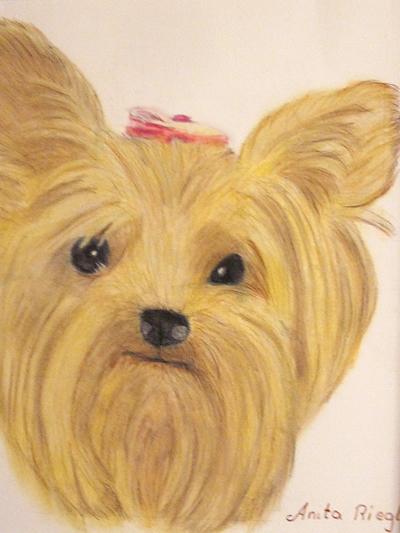 Portraitzeichnungen Anita Riegl